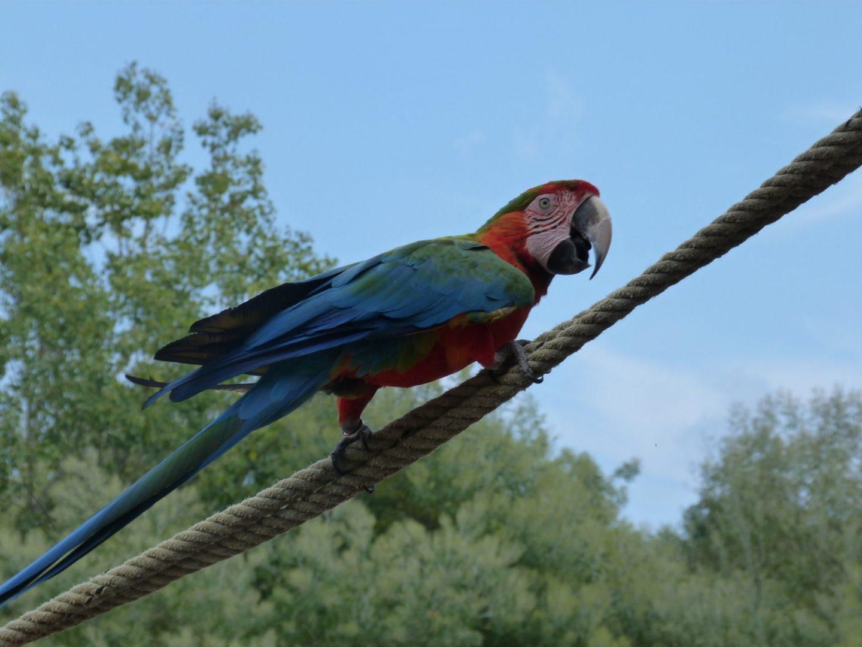 Perroquet sur corde